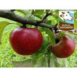 BIO Jablka - konzumní